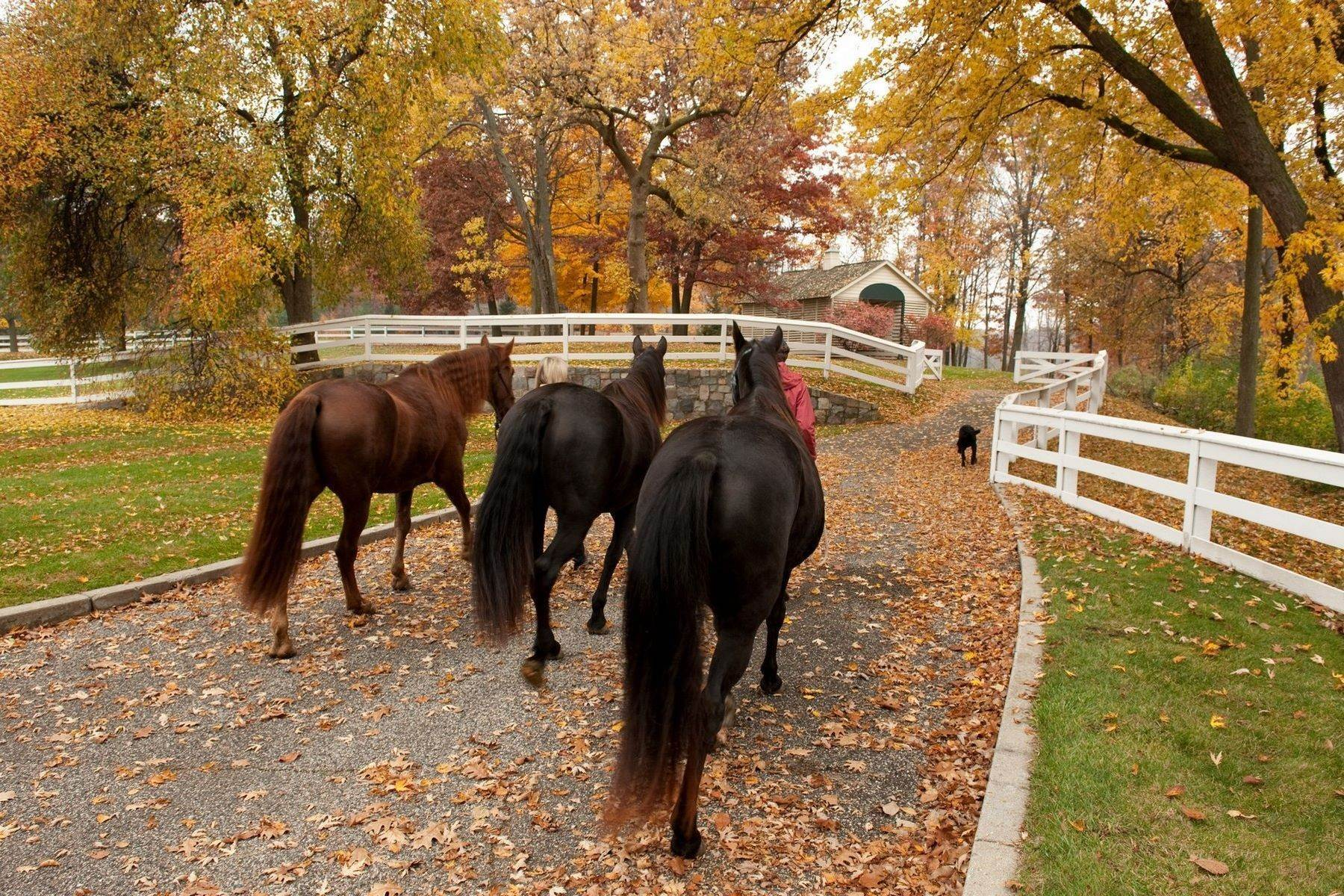 31. Property for Sale at The Stables 2670 Turtle Lake Drive, #44 and #45 Bloomfield Hills, Michigan 48302 United States